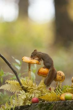 table survey -  squirrel   mushroom