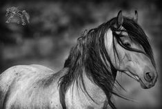 Soon I shall go to sleep, in hopes of seeing him again. His intelligent soft eyes, his elegant head. His soft heart, and his four legs. For my horse is a dream, a dream of the making.