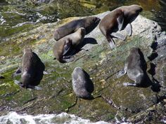 Combine a flight with a cruise trip to get closer to the wildlife of the Milford Sounds Milford Sound, Cruise Travel, Closer, Wildlife, Animals, Animales, Animaux, Animal, Animais