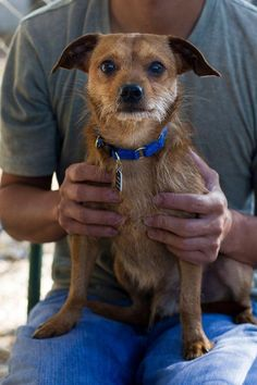 ROD is an adoptable Terrier searching for a forever family near Baton Rouge, LA. Use Petfinder to find adoptable pets in your area.