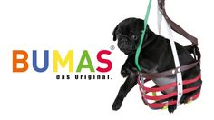 Buy the best custom-made dog muzzle from BUMAS. A custom muzzle is the best muzzle for your canine or beloved pet. These colourful and comfortable best fit muzzles are made from BioThane - original BUMAS are animal welfare certificated. Mans Best Friend, Best Friends, Dog Muzzle, Animal Welfare, Best Dogs, Custom Made, Your Dog, The Originals, Pets