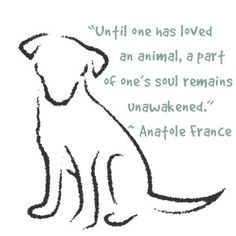 Until one has loved an animal, a part of ones soul remains unawakened. dog-philosophy
