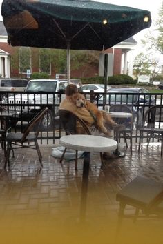 Als dieser Welpe immer zum Kuscheln bereit war. | 24 Fotos, die beweisen, dass es keinen treueren Freund als einen Hund gibt
