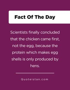 Scientists finally concluded that the chicken came first, not the egg, because the protein which makes egg shells is only produced by hens.