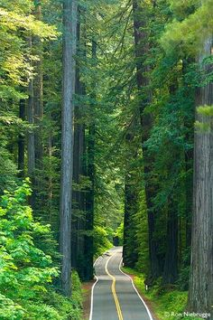 """Avenue of the Giants, Humbolt Redwoods State Park, California>>> missing  """"home"""" so much lately! I can close my eyes and hear the specific sound, smell and feel of the air, the redwood forest is one of the most magical places on the planet."""