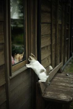 How sweet with the little girl on one side of the window glass and the kitten on the other side!
