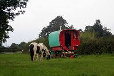 Gypsy Caravan - This appears every year around harvest-time, and goes again after a day or so... #horse #animal #creature #pet #life #equine #caravan #wagon #roulotte