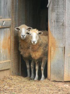 Notforgotten Farm : Waiting it out ~