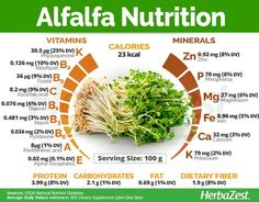 You saved to Infographics HerbaZest - Alfalfa has many health properties apart from its nutritive value. Tags: #herbazest #infographic #health #natural #medicine #alfalfa #nutrition #superfood