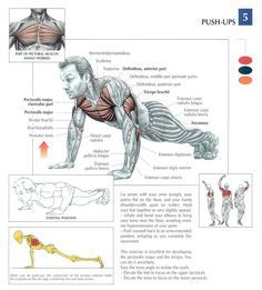 Push-Ups ♦ #health #fitness #exercises #diagrams #body #muscles #gym #bodybuilding #chest