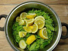 Jak na výrobu domácích bylinkových sirupů | recepty Wild Edibles, Healing Herbs, Healthy Drinks, Food Inspiration, Pesto, Smoothies, Herbalism, Spices, Food And Drink
