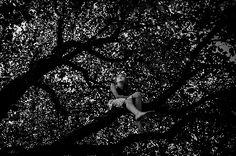 Alicja Brodowicz, Girl sitting on a tree, WallArtNow gallery.