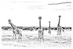Dave Hamman Photography African wildlife images as fine art prints on a fine art canvas or a fine art paper. wildlife photos Chitabe camp in Botswana African Animals, Animal Prints, Fine Art Paper, Pet Birds, Giraffe, Fine Art Prints, Canvas Art, Wildlife, Sofa