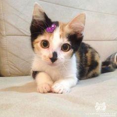 From @isabbiondo: sweet little tiger! #catsofinstagram [source: http://ift.tt/2ltJpqy ]