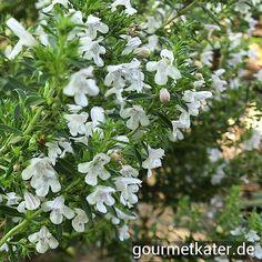 Mein blühendes Bohnen-Kraut im Garten #gardening #food #herbs #flower