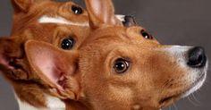 Raças de Cachorros - Raças de A a Z