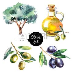 Set of hand drawn colorful watercolor olive painting isolated on white background. Illustration of fruit olives, olive tree, olive oil - stock photo Tree Of Life Symbol, Celtic Tree Of Life, Watercolor Fruit, Watercolor Paintings, Watercolor Background, Evergreen Tree Tattoo, Christmas Tree Quilt, Family Tree Poster, Willow Tree Tattoos