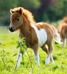 Male Horse Names: Best Stud, Colt, Gelding & Stallion Names – My Pet's Name Cute Baby Horses, Baby Farm Animals, Funny Horses, Cute Little Animals, Funny Animals, Cute Horse Pictures, Baby Animals Pictures, Horse Photos, Cute Animal Pictures