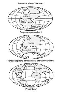 evidence for plate tectonics essay