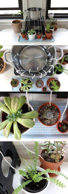 Self-watering for houseplants | Best DIY Self-Watering System Ideas