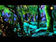 Verhalen van de boze heks:6. De egel vindt een toverspreuk.