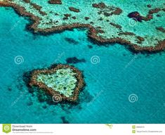 Great Barrier Reef - Download From Over 53 Million High Quality Stock Photos, Images, Vectors. Sign up for FREE today. Image: 36895010