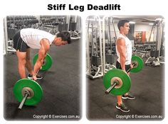 Stiff leg deadlift is an excellent exercise for building strength in the hamstring muscles as well as the lower back and is a good compliment to the squat exercise, typically done in conjunction with this move.  Stiff leg deadlifts are a very intense move, meaning you should only train them once or possibly twice per week and always do them towards the start of your workout program when you have the most energy.  Watch a demo... https://www.exercises.com.au/stiff-leg-deadlift/