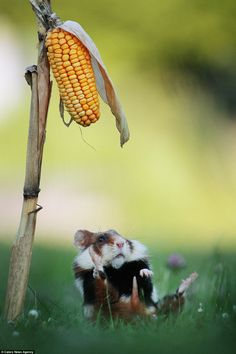 The images were taken in a cornfield, near a small village in Austria and is a hot spot fo...