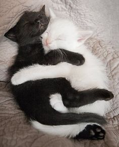 This is an adorable photo that captures, yin and yang.