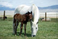 When Horse-Breeding Evolves Into Horse Training, Part 2