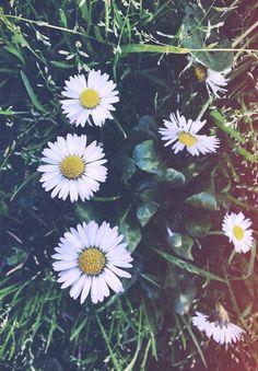 """"""" Canminava fiera di sé, come una #margherita che non ha nulla da invidiare ad una rosa"""""""