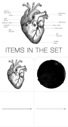 """""""Anatomy of the Human Heart"""" by indigo-summer ❤ liked on Polyvore featuring art"""