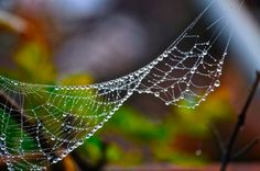 Web -- The social network by Danny Velasco  on 500px