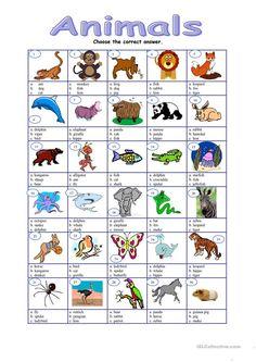 Animals - multiple