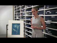 Anna Atkins Cyanotypes - YouTube Cyanotype, The V&a, Female Photographers, Atkins, Photo Book, Anna, Youtube, Videos, Creative