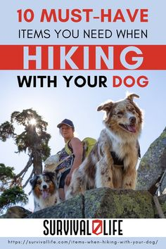Read on to learn the 10 must have items when hiking with your dog. #survivallife #survival #preparedness #survivalist #prepper #camping #outdoors #spring #outdoorsurvival #hiking #hikingwithdog #hikingitems Survival Life, Survival Tools, Hiking Dogs, The Mountains Are Calling, Camping Outdoors, Must Have Items, Outdoor Survival, Emergency Preparedness, Must Haves