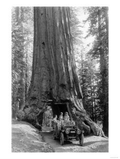 Art Print: View of a Loaded Model-T Ford under Wawona Tree - Redwood National Park, CA by Lantern Press : Old Photos, Vintage Photos, Giant Tree, California National Parks, Vintage Medical, Old Trees, Vintage Fishing, Stock Art, Tree Art