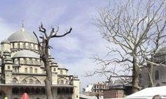 007 James Bond serisinin son filmi 'Skyfall'ın Eminönü ve Beyazıt'ta gerçekleşen çekimleri başlamadan önce kapatılacak yollarla tartışmalara neden olmuştu. Şimdi ise bölgede ikamet eden bazı görgü tanıkları, filmin çekimleri için ikisi asırlık çınar, 12 ağacın kesildiğini iddia etti. http://www.hurriyet.com.tr/kultur-sanat/haber/20369499.asp