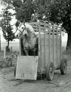 Early 20th century horse trailer!  Have a good day!   :-)  #eecustomhorseshoes #horsetrailer #horselover