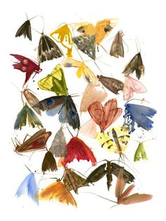 Allyson Reynolds print - Moths 6