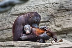 Cele mai haioase animale #animals #love #amazing