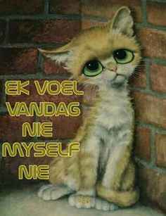 Afrikaanse Quotes, Crochet Owls, Animals And Pets, Breakup, Qoutes, Prayers, Mary, Healing, Messages