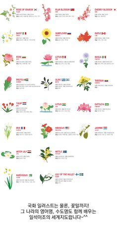 Rose Of Sharon, Hibiscus, Cherry Blossom, Tulips, Infographic, Daisy, Global Village, Education, Illustration