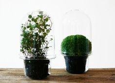 terrarium & planter all in one #diy #wishlist