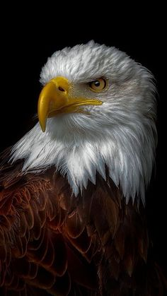 Types of Eagles - American Bald Eagle art portraits, photographs, information and just plain fun Eagle Images, Eagle Pictures, Animal Pictures, Photo D Aigle, Wildlife Photography, Animal Photography, Beautiful Birds, Animals Beautiful, Aigle Animal