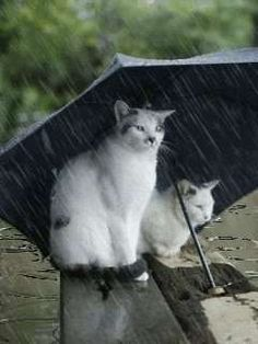 Cats under an Umbrella