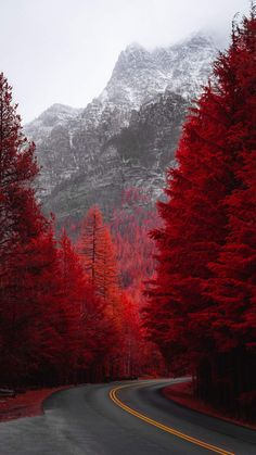 Red Forest Road iPhone Wallpaper - iPhone Wallpapers
