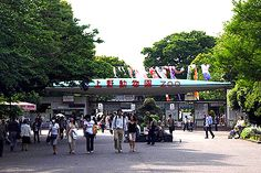 Ueno Zoo, Tokyo's biggest zoo. Famous for their panda!