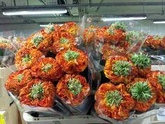 #Rose #Rosa #FlashEye; Available at www.barendsen.nl
