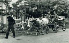 Szállítás kétökrös szekérrel Dunapatajon, 1960-as évek. Traditional, Animals, Animales, Animaux, Animal Memes, Animal, Animais, Dieren